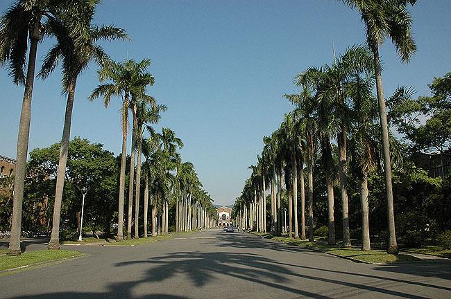 臺灣大學招募約僱人員 報名至16日截止
